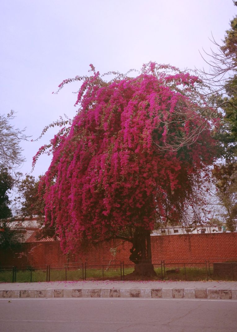 Creeper or Tree?!